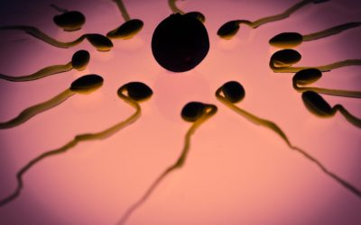 IVF with sperm donation