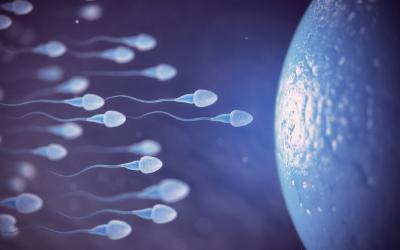 Kako znamo da je spermogram dobar?